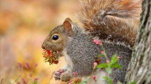 Preview wallpaper squirrel, nut, legs, ears, eyes