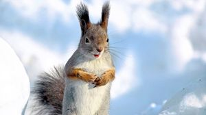 Preview wallpaper squirrel, snow, winter, animal