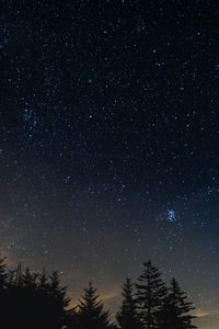 Preview wallpaper starry sky, night, trees, night landscape