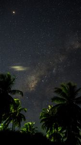 Preview wallpaper starry sky, palm trees, branches, leaves, night