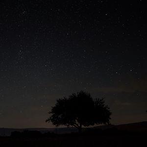 Preview wallpaper starry sky, tree, night, sky