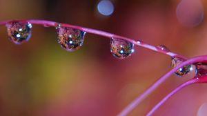 Preview wallpaper stem, color, drops, dew