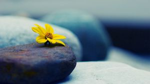 Preview wallpaper stone, flower, petals, yellow