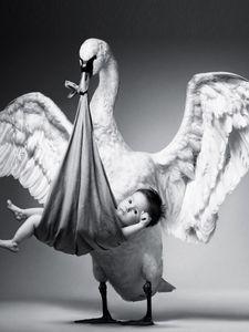 Preview wallpaper stork, baby, wonder, black white, gift