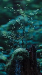 Preview wallpaper stump, moss, branches, forest, macro, nature, green