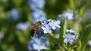 Preview wallpaper summer, flowers, bee