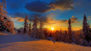 Preview wallpaper sun, decline, evening, snow, trees, fir-trees, shade