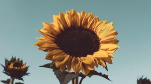 Preview wallpaper sunflower, flower, bloom, yellow, plant