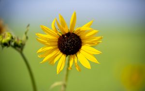 Preview wallpaper sunflower, flower, macro, yellow