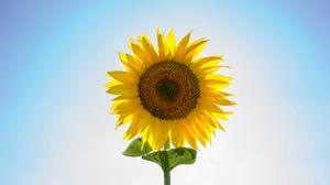 Preview wallpaper sunflower, flower, petals, seeds