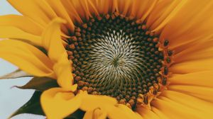 Preview wallpaper sunflower, flower, yellow, close-up, bloom