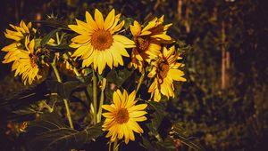 Preview wallpaper sunflower, flowers, summer, yellow