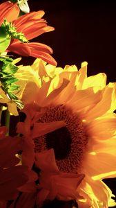 Preview wallpaper sunflowers, flowers, petals, yellow, macro