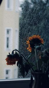 Preview wallpaper sunflowers, flowers, vase, window, rain
