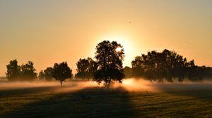 Preview wallpaper sunrise, fog, trees, dawn, morning