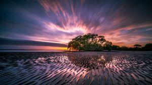 Preview wallpaper sunrise, ocean, sea, shore, tree