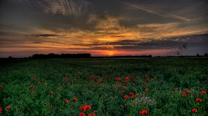 Preview wallpaper sunset, field, poppies, landscape
