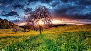 Preview wallpaper sunset, field, sky, tree, landscape