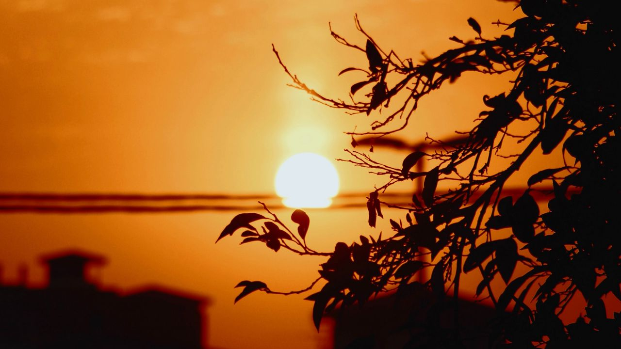 【壁纸桌面】日落,太阳,树枝,剪影,天空高清壁纸免费下载