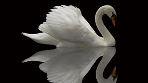 Preview wallpaper swan, bird, grace, beautiful, feather