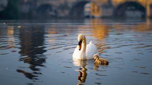 Preview wallpaper swan, bird, lake, building