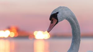 Preview wallpaper swan, bird, white, lights, blur