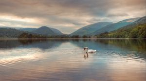 Preview wallpaper swan, lake, mountains, clouds, reflection