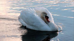 Preview wallpaper swan, swim, bird, water