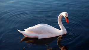 Preview wallpaper swan, water, feathers, swimming