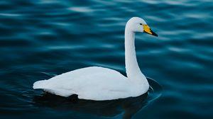 Preview wallpaper swan, white, bird, water
