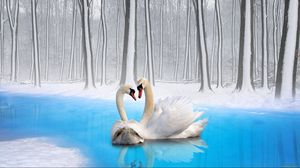 Preview wallpaper swans, couple, birds, loyalty
