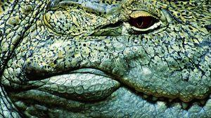 Preview wallpaper teeth, crocodile, eye