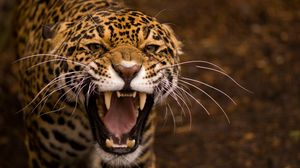 Preview wallpaper teeth, jaguar, cat, eyes