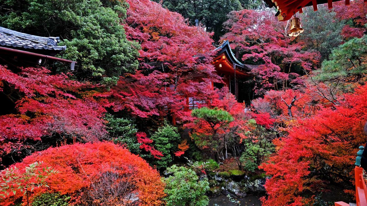 Wallpaper temple, autumn, japan, kyoto