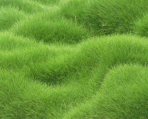 Preview wallpaper texture, grass, field