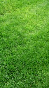 Preview wallpaper texture, grass, field, green