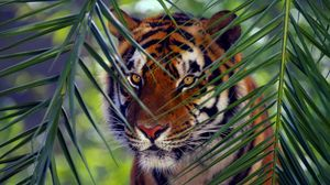 Preview wallpaper tiger, face, leaves, look, striped