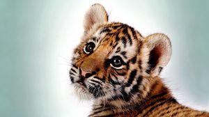 Preview wallpaper tiger, kitten, big cat, cub, predator
