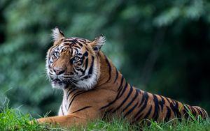 Preview wallpaper tiger, predator, animal, big cat, glance
