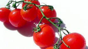 Preview wallpaper tomato, branch, vegetable