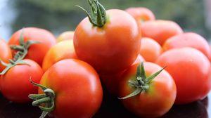 Preview wallpaper tomato, vegetable, ripe