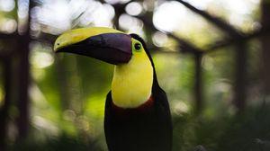 Preview wallpaper toucan, bird, beak, colorful
