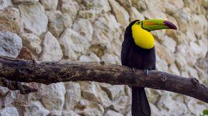 Preview wallpaper toucan, bird, beak, branch, tail