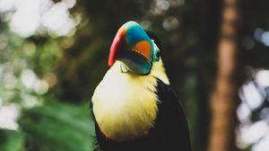 Preview wallpaper toucan, bird, beak, blur