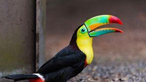 Preview wallpaper toucan, bird, color, colorful