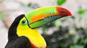 Preview wallpaper toucan, tropical bird, beak, colorful