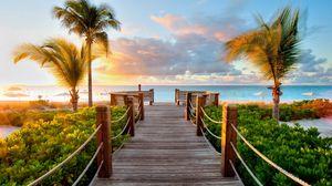 Preview wallpaper track, palm trees, beach, sea, ocean