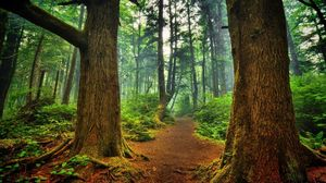 Preview wallpaper track, trees, wood, landscape, freshness