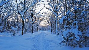 Preview wallpaper track, winter, snow, trees, wood, young growth, bushes, twilight, silence
