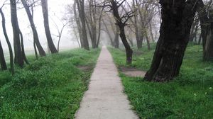 Preview wallpaper track, wood, fog, melancholy